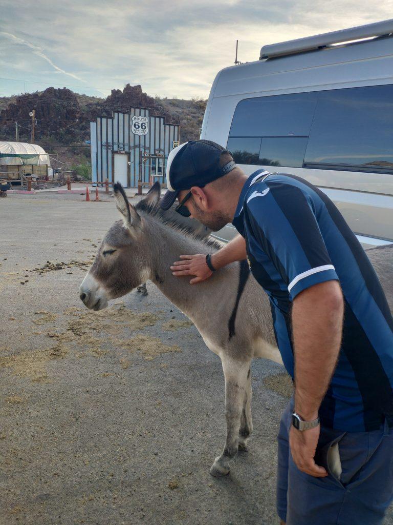 oatman ruta 66 burros
