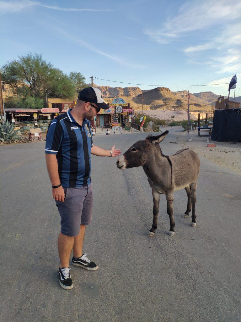 burros de oatman ruta 66