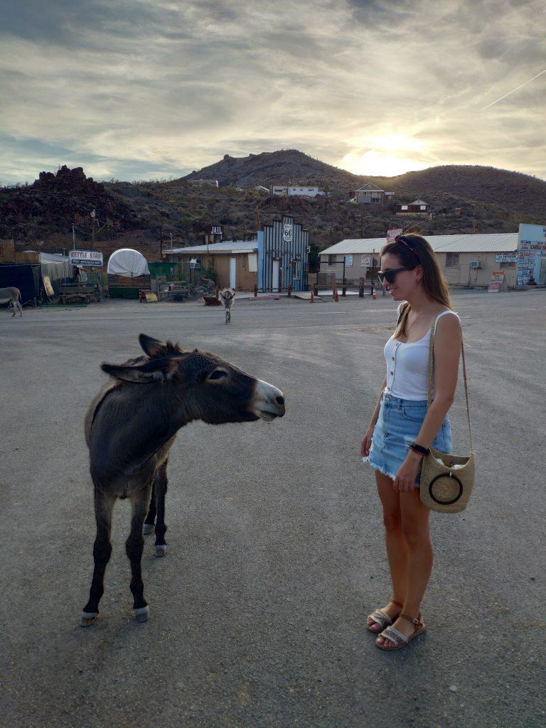 burros salvajes en ruta 66